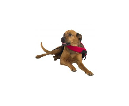 NRS CFD - Dog Life Jacket. Accessories - Parts
